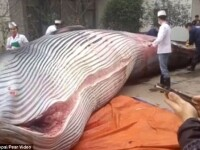 O balena de 8 tone, taiata chiar in fata unui restaurant din China, sub privirile trecatorilor