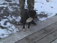 Un tanar si-a lasat cainele pitbull sa faca macel la o stana din Arad. Ciobanul a crezut initial ca au atacat sacalii