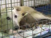 Un medic veterinar are dosar penal, dupa ce a incercat sa salveze 3 catei si pe mama lor. De ce a fost acuzat barbatul