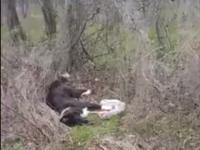 Masacru pe un câmp de lângă Autostrada București - Pitești. Zeci de câini, împușcați de un pădurar