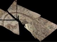 """Rămăşiţe de dinozaur, descoperite în Australia: """"Sunt foarte rare"""". FOTO"""