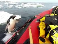 Momentul în care un pinguin sare din apă direct în barcă unor exploratori