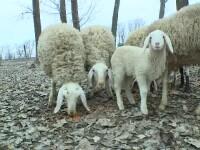 Modelul german, aplicat în România. De ce e bine să izolezi casa cu lână