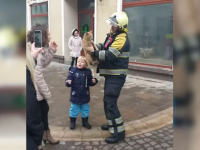 Pisică blocată pe o clădire din Oradea, salvată de pompieri. Ce s-a întâmplat apoi cu ea