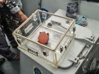 A doua cutie neagră a avionului indonezian prăbuşit a fost găsită. Unde era îngropată