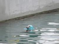 O imagine cu o focă având pe cap o pungă a declanşat indignare online