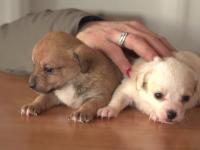 Cum poţi să adopţi un câine din adăpost pe Facebook şi să-ţi fie adus direct acasă