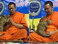 Ce i-a făcut o pisică unui călugăr budist care încerca să se concentreze. VIDEO