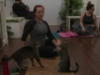 Metode inedite de relaxare. Cursuri de yoga într-o cafenea cu pisici
