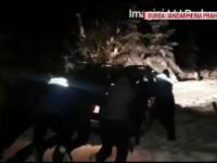 Trei maşini, înzăpezite pe Valea Azugii. Jandarmii le-au scos cu lopeţile din troiene