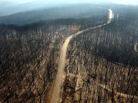 """Măsurile luate de guvernul Australiei după """"dezastrul ecologic"""" cauzat de incendii"""