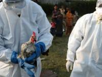Avertisment CE: Ungaria a trimis în România carne de curcan de la fermele cu gripă aviară