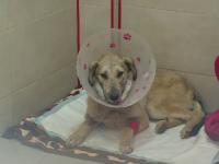 Cum funcționează arma cu care a fost mutilat câinele din Târgu Bujor. Rănile cumplite suferite de animal