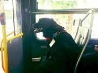 Câinele care a uimit internetul. Ce face în fiecare zi când pleacă de acasă GALERIE FOTO