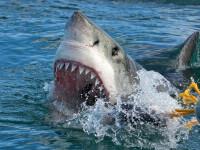O femeie a murit pe o plajă din Noua Zeelandă. Autoritățile bănuiesc mușcătura fatală a unui rechin. De ce nu e clar