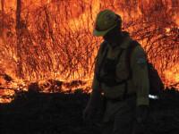 Alerta in Grecia! Incendii mistuitoare de vegetatie din cauza caldurii