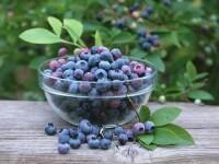 Romania stie sa piarda bani. Exportam fructe de padure si le cumparam inapoi ca gemuri si dulceturi