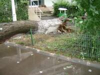 Furtuna in Capitala: copaci rupti, strazi inundate, masini facute zob