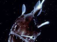 Infiorator. Monstruozitati de pesti ce traiesc in adancurile oceanelor