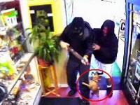 Cel mai tare paznic. Un Chihuahua a pus pe fuga doi gangsteri inarmati. VIDEO