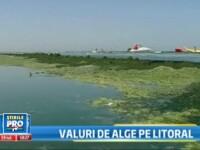 Marea Neagra e verde. Mii de tone de alge le distrug vacanta turistilor