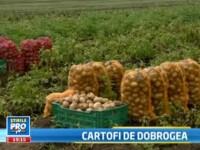 """Noua """"patrie a cartofilor"""". Ce este FABULA si cum ar putea revolutiona agricultura din Tulcea"""