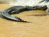 Crocodilul de peste 6 metri, capturat anul trecut in Filipine, a intrat in Cartea Recordurilor