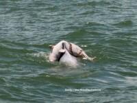 Un vapor plin cu turisti, cu ochii in lacrimi in fata aceste imagini.Ce face delfinul din fotografie