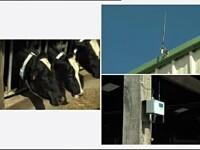 Fermierii din Germania au trecut la alt nivel. Primesc alerte prin SMS de la vacile lor