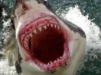 O adolescenta de 15 ani a murit dupa ce a fost sfasiata in doua de un rechin, in Oceanul Indian
