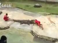 Dresorul si-a pus capul in gura crocodilului. Ce a urmat i-a ingrozit pe spectatori. VIDEO