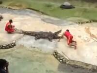 Imagini socante. Un dresor din Thailanda este muscat de cap de un crocodil, in timpul unui spectacol
