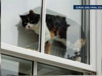 O pisica a tinut sub teroare un cuplu timp de doua zile. Oamenii, salvati de un vecin imbracat in costum de motociclist