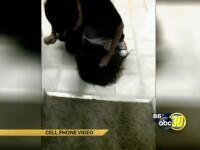 Un baiat de 17 ani, filmat in timp ce-si batea sora, a fost arestat dupa ce imaginile au ajuns pe Facebook