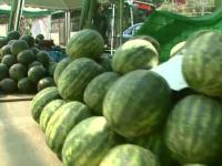 Pepenii de Dabuleni au ajuns in sfarsit pe tarabe. 200 de tone pleaca zilnic in toata tara pentru a-i inlocui pe cei grecesti