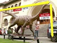 Magyarosaurus, dinozaurul care zburda prin Transilvania acum 70 de mil. de ani. O macheta uriasa va ajunge in Tara Hategului