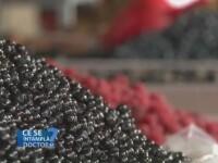 Fructele de padure, alternativa naturala a complexelor de vitamine si minerale. Ce proprietati nutritive au acestea