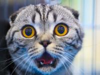 Una dintre cele mai mari tari din lume a declarat razboi pisicilor.