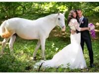Povestea lui Blanco, un cal norocos. Cand l-au gasit era mai mult mort decat viu, iar acum oamenii platesc pentru poze cu el