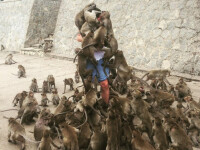 Un tanar a intrat in cusca maimutelor, la gradina zoologica. Ce s-a intamplat in secunda urmatoare a devenit viral: FOTO