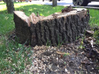 Nicușor Dan l-a demis pe șeful Direcției de Mediu, pentru că a aprobat tăierea a 22 de copaci