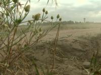Defrisarile masive transforma sudul Romaniei in DESERT. Proiectul de 5 MIL. euro care ar putea salva padurile