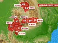 Romania are cele mai mari suprafete de paduri virgine din Europa. Planul autoritatilor pentru a le salva