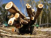 In Romania, padurarii taie ilegal padurile. Angajatul unui Ocol Silvic din Bistrita-Nasaud a fost arestat pentru defrisare