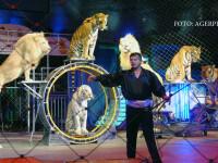 Scandal la Circul Globus, din cauza condiţiilor în care ar fi ţinuţi tigrii