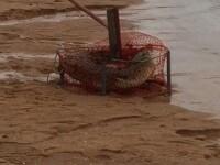 Surpriza traita de cativa pescari din Australia. Ce au gasit intr-un navod. VIDEO