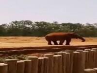 O fetita de sapte ani a fost omorata de un elefant, in timp ce voia sa ii faca poze. Imaginile filmate de un martor. VIDEO