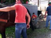 Un primar din Romania vrea sa le puna scutece cailor, ca sa aiba strazi curate. Reactia localnicilor: