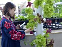 iLikeIT. Cativa studenti romani au creat un gadget pentru cresterea plantelor in apartament. Ce stie sa faca Urban Gardener