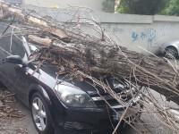 Peste 20 de urgente in Capitala, in urma furtunii de luni seara. Mai multi copaci au cazut peste masini